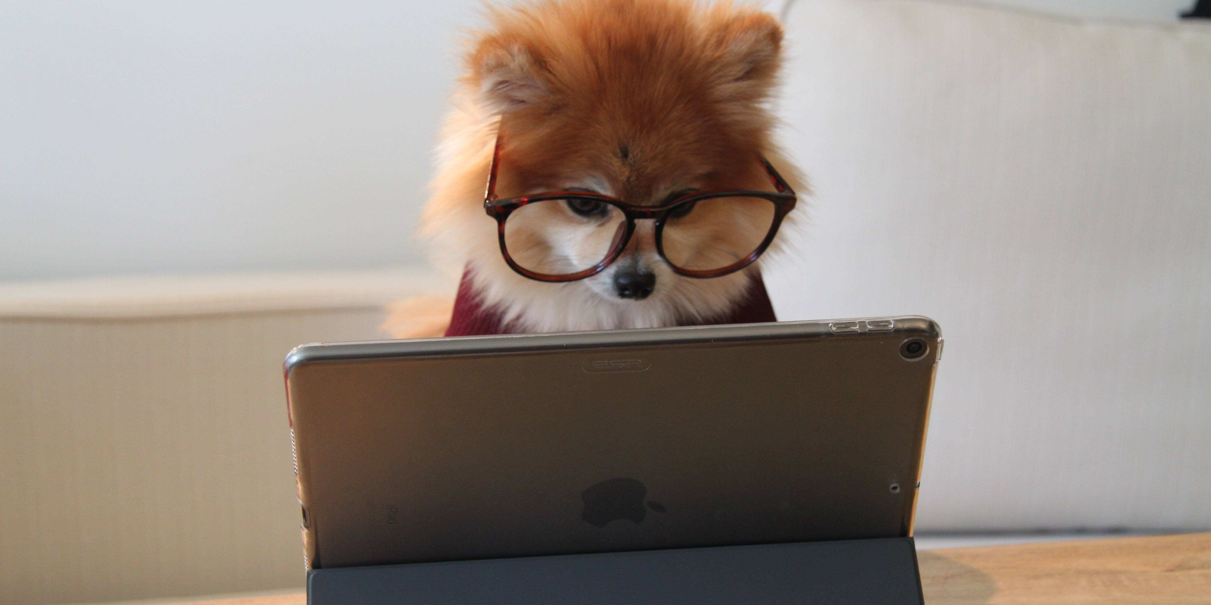 a dog wearing glasses and using an ipad